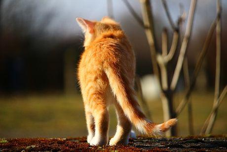 obrázky skutočné mačička