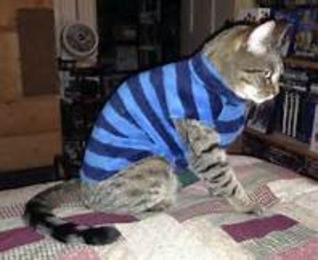 Mačička lízať výbery
