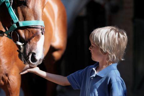 jazdecké športy, kone