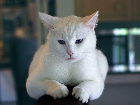 Veľká mačička obrázok
