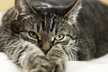 Mačička obrázky obrázok