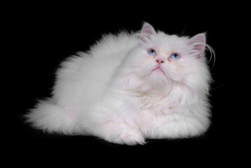 Spravte mačke doma kozmetiku!