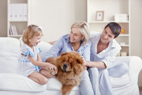 Pes do rodinky...A...Chceme psa....?