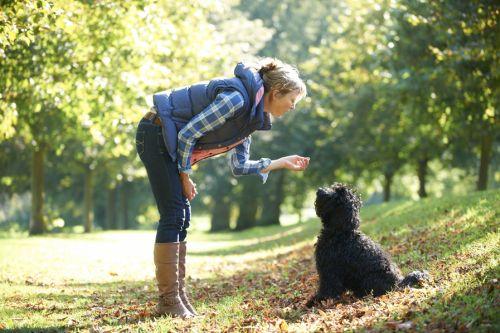Prečo psy považujú svoje výkaly za delikatesu?