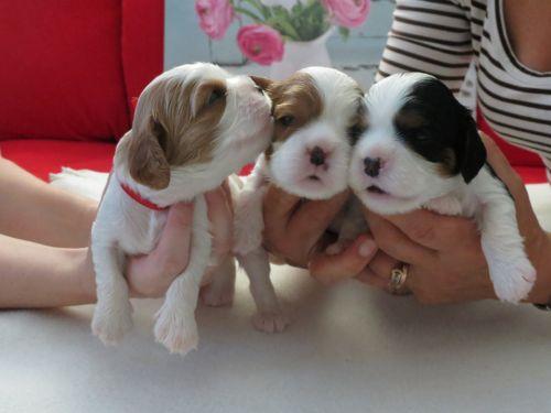 Odetkine šteniatka - Prvé týždne u mamy