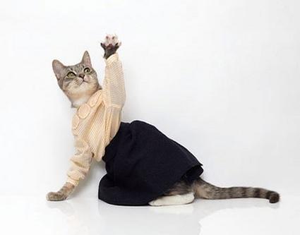 Módne vychytávky pre mačky