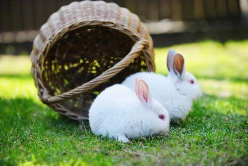 Chcete domov zajačika alebo králika?