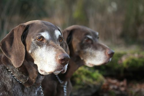 S láskou k starším psom