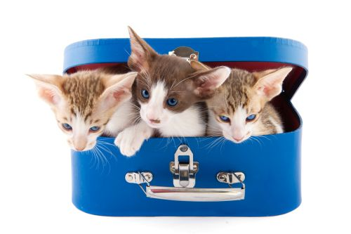7 tipov ako dostať mačku do auta