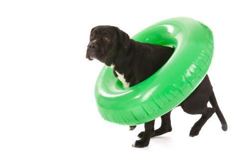Aby si aj váš pes užíval kúpanie a radosť z vody