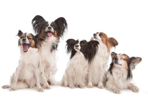 Prepočítajte si psí vek na ľudské roky
