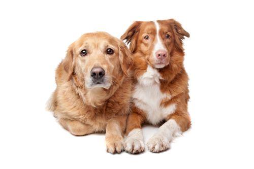 Prečo je fajn mať dvoch psov