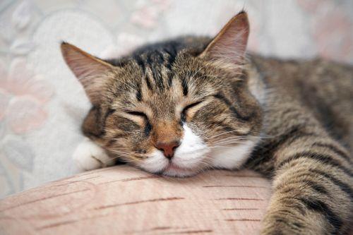 O čom mačky snívajú