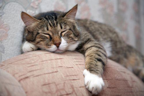 Zaručene potešiť svoju mačku 2