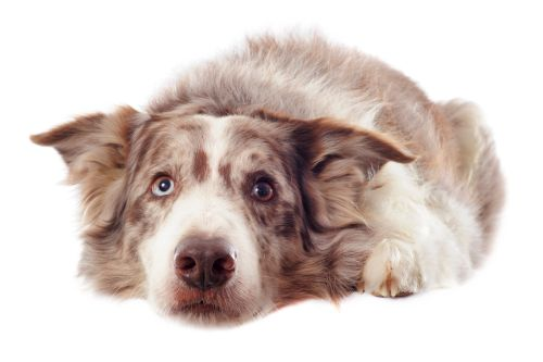 Cítia sa psy previnilo?