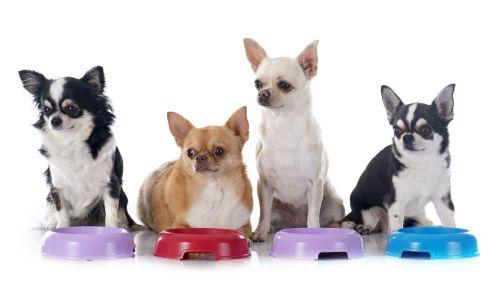 Prečo psy jedia a jedia....a stále sú hladní