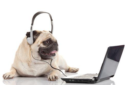 Ako si priviesť psa do práce