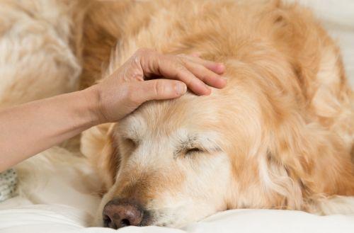 10 varovných príznakov rakoviny u psa
