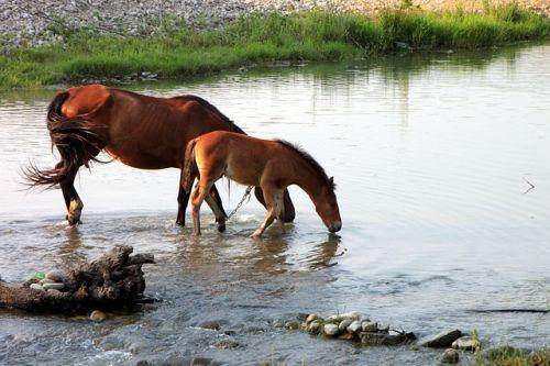 Pozor na dehydratáciu koní