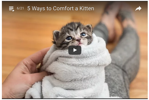 Chcete potešiť mačiatko, ktoré nemá mamu?