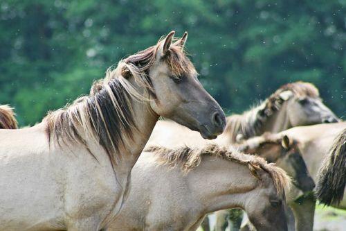 Fascinujúce kone