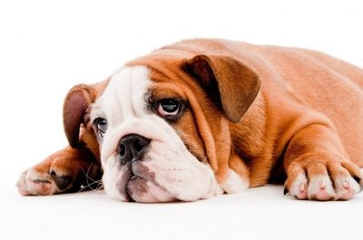 Dehydratácia u psov