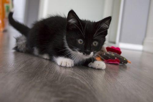 Čo darovať mačke