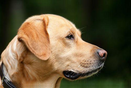 Čo si pamätá pes