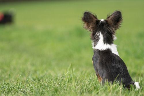 Kedy spoznáme, že starká sa už nedokáže postarať o psa