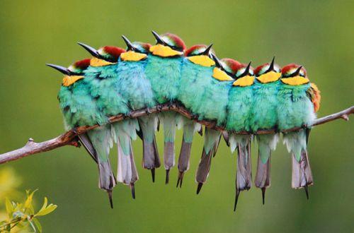 FotoZvery.  Počestné vtákoviny na piatok.