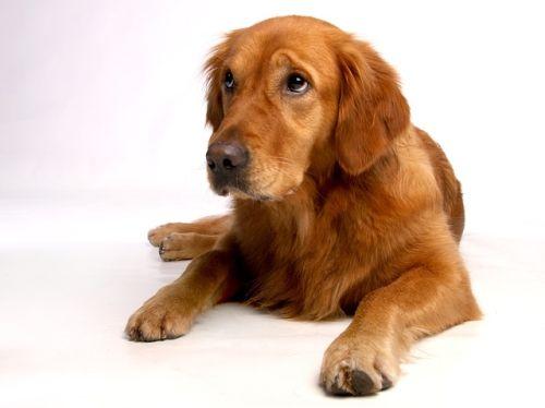 Veda psích emócií