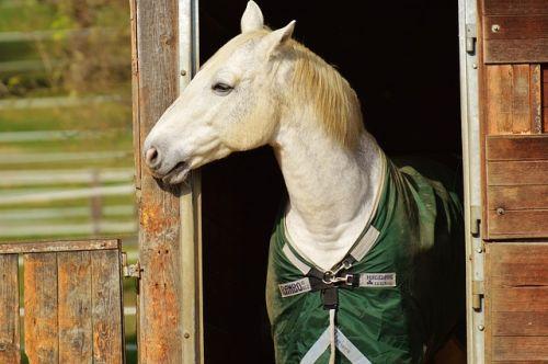 Zaujímavosti zo sveta koní – ktoré sú najväčšie a najmenšie?