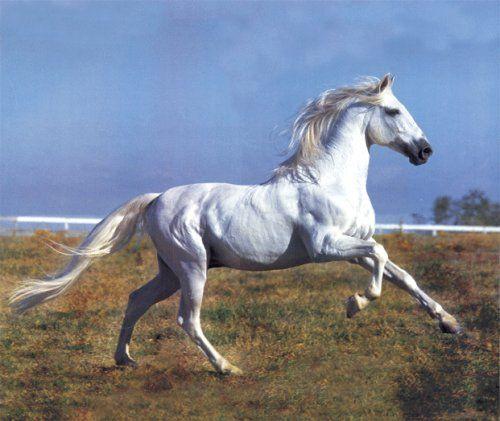 Slepé body koňa