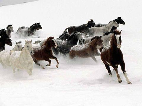 Zima nie je konským nepriateľom
