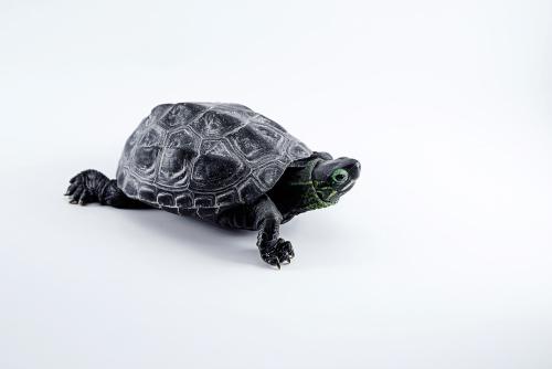 Ako zazimovať korytnačku?