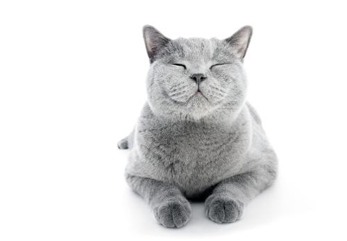 Ako odčervovať mačku?