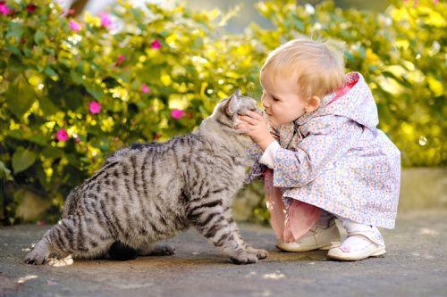 Mačka a dieťa, možné problémy