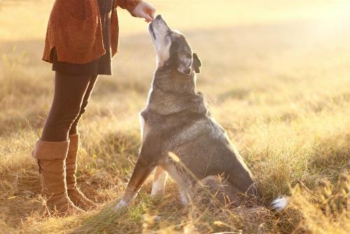 Najčastejšie chyby pri výcviku psa, ktoré robíme takmer všetci