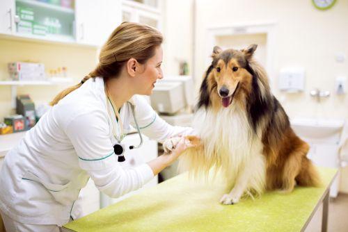 Príznaky, kedy navštíviť veterinárnu pohotovosť aj v noci