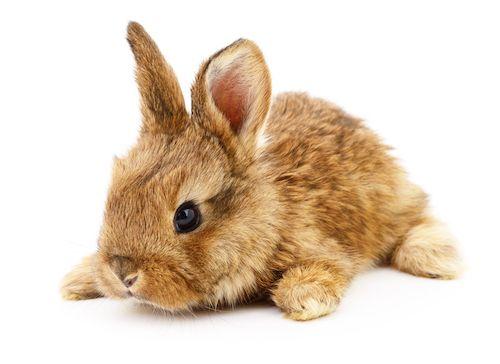 Čo potrebujete pre zajaca?