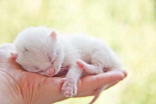 Ako nakŕmiť malé mačiatko