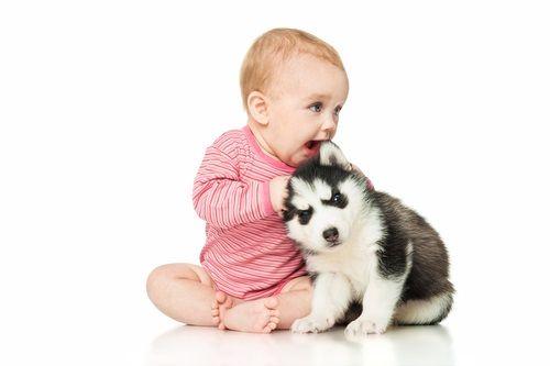 Preč s alergiou alebo zvieratá v domácnosti