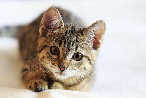 Čo potrebuje mačka