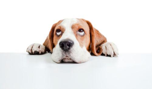 Vysvedčenie a pes