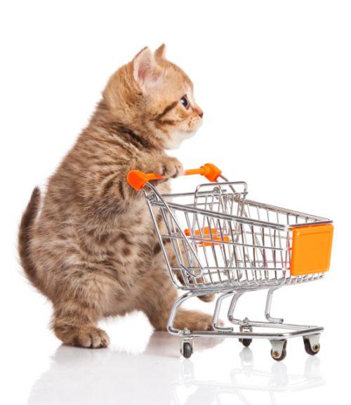 Ako kŕmiť mačku?
