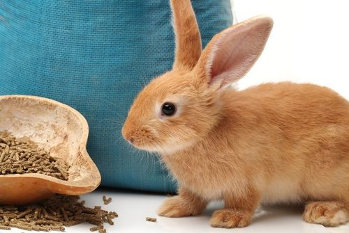 Jedálniček pre vášho zajka