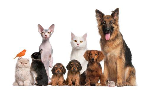 TOP rebríček domácich zvieratiek