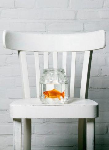 Humánne utratenie rybičky