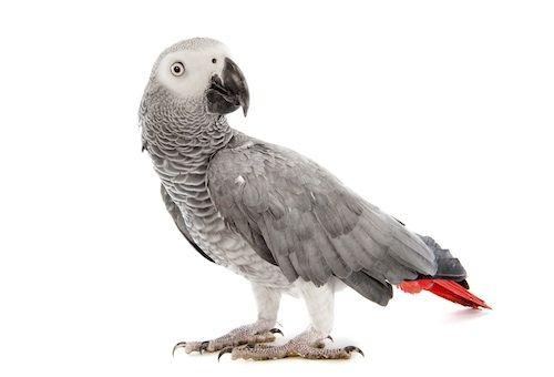 Papagáj pre väčšie deti