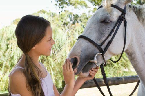 Chcem vlastného koňa. Koľko stojí kôň?